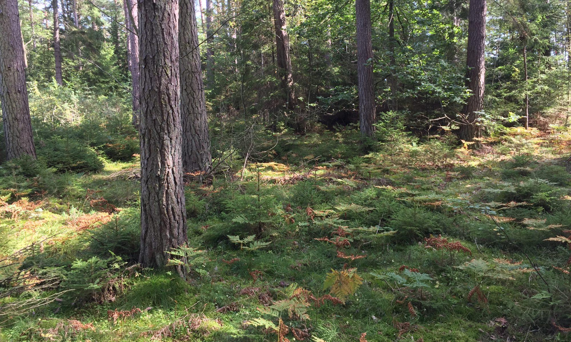 Functional Biodiversity Lab, University of Gothenburg